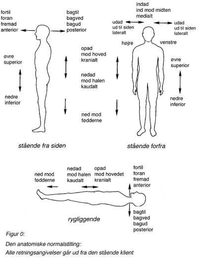 latinske betegnelser kroppen